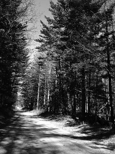 南アルプスユネスコエコパークのカラマツ林。計画が進めば「盛り土」に埋まることになる。