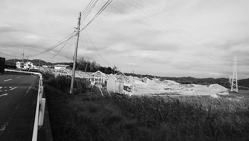 強風でつぶれた農業用ハウス。